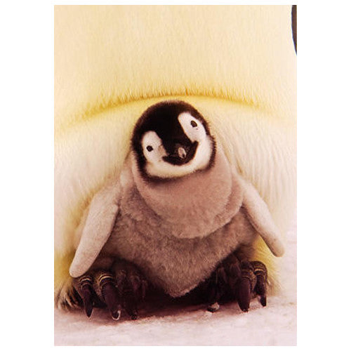 Penguin Chick Card (Blank)