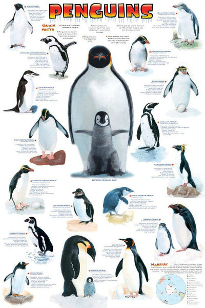 "The World Of Penguins Poster (24"" x 36"")"