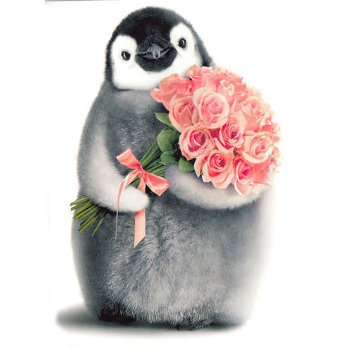 Penguin XO Birthday Card