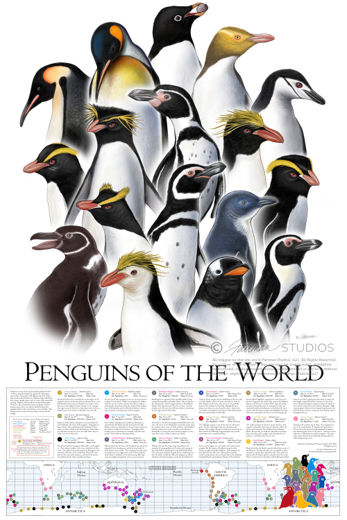 Penguins Penguin world poster gift