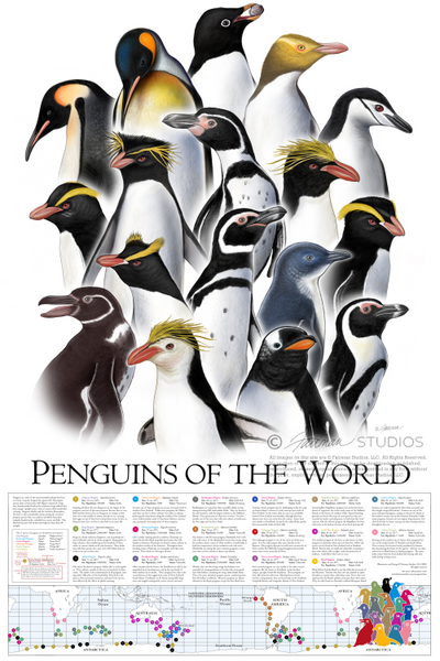 "Penguins Of The World (24"" x 36"") Poster"