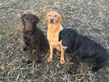 Ludo, Beamer and Cooper