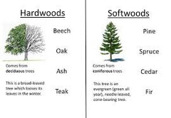 Hard and Softwood