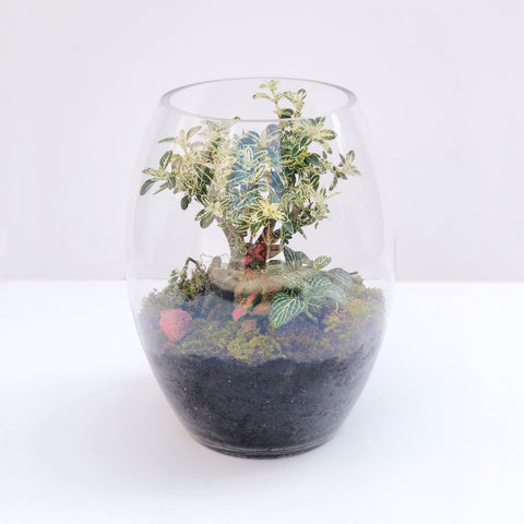 The Bonsai Terrarium