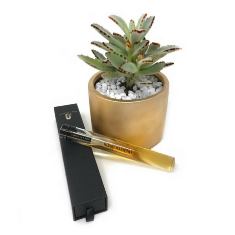 The Harvey Succulent Gift Set