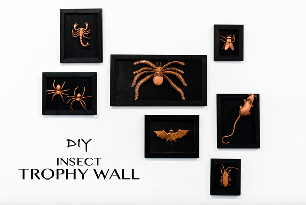 DIY Halloween Decoration | Insect Trophy Wall | BYDEAU