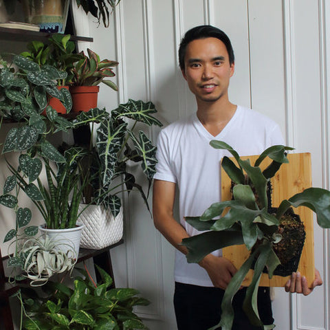 House plant journal darryl cheng
