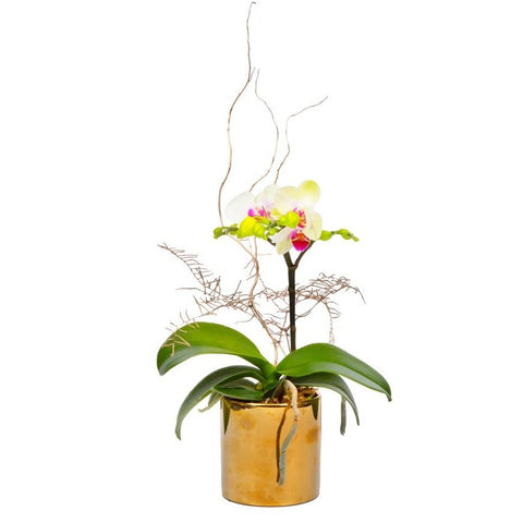 The Gratitude | Mini Orchid in a gold pot | BYDEAU Hong Kong