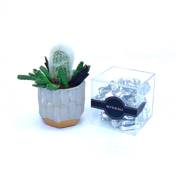 The Casper | Cactus in Pot | Hong Kong Plant Delivery