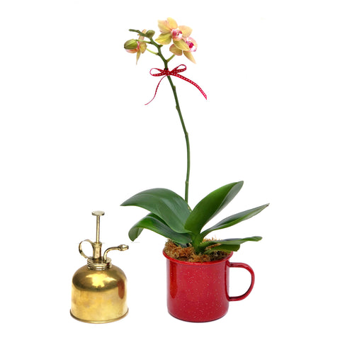 Orchid and Mister Gift Set
