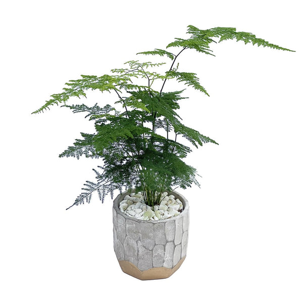 The Archie | Fern Office Plant in Ceramic Pot | BYDEAU Hong Kong