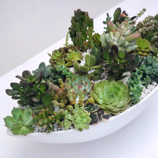 Lifestyle image of The Clement Succulent Arrangement | BYDEAU