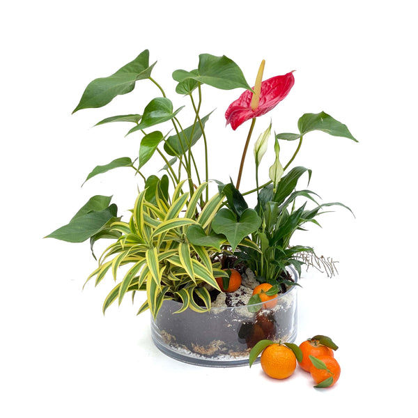 The Logan | Chinese New Year Plants | BYDEAU Hong Kong