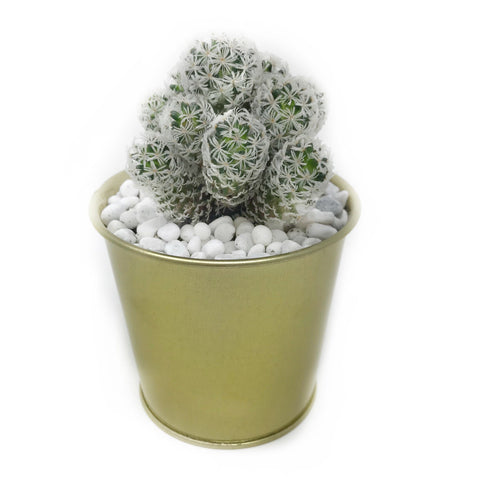 cactus plant gift same day delivery hong kong Vase Arrangement - The Sho