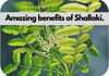 Shallaki Herb - Learn How to Use, Dosage & its Amzaing Benefits