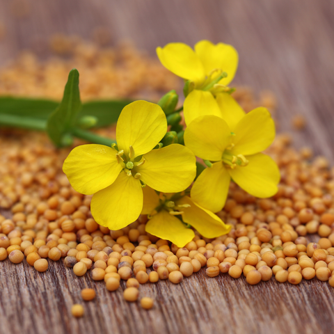 Mustard Seeds - Diet for piles