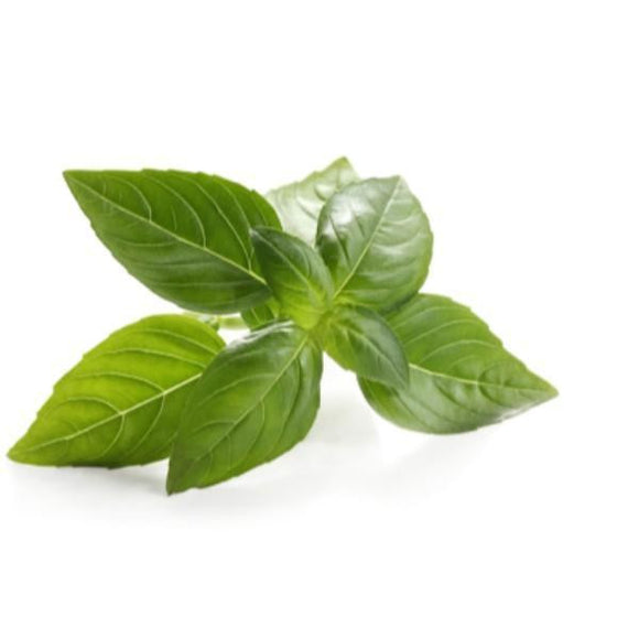 Basil Essential Oil - Ayur Space