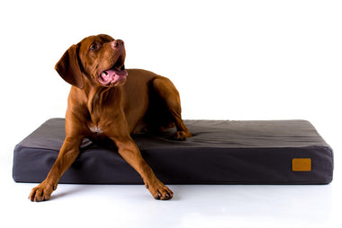 Natural Orthopaedic Dog Beds