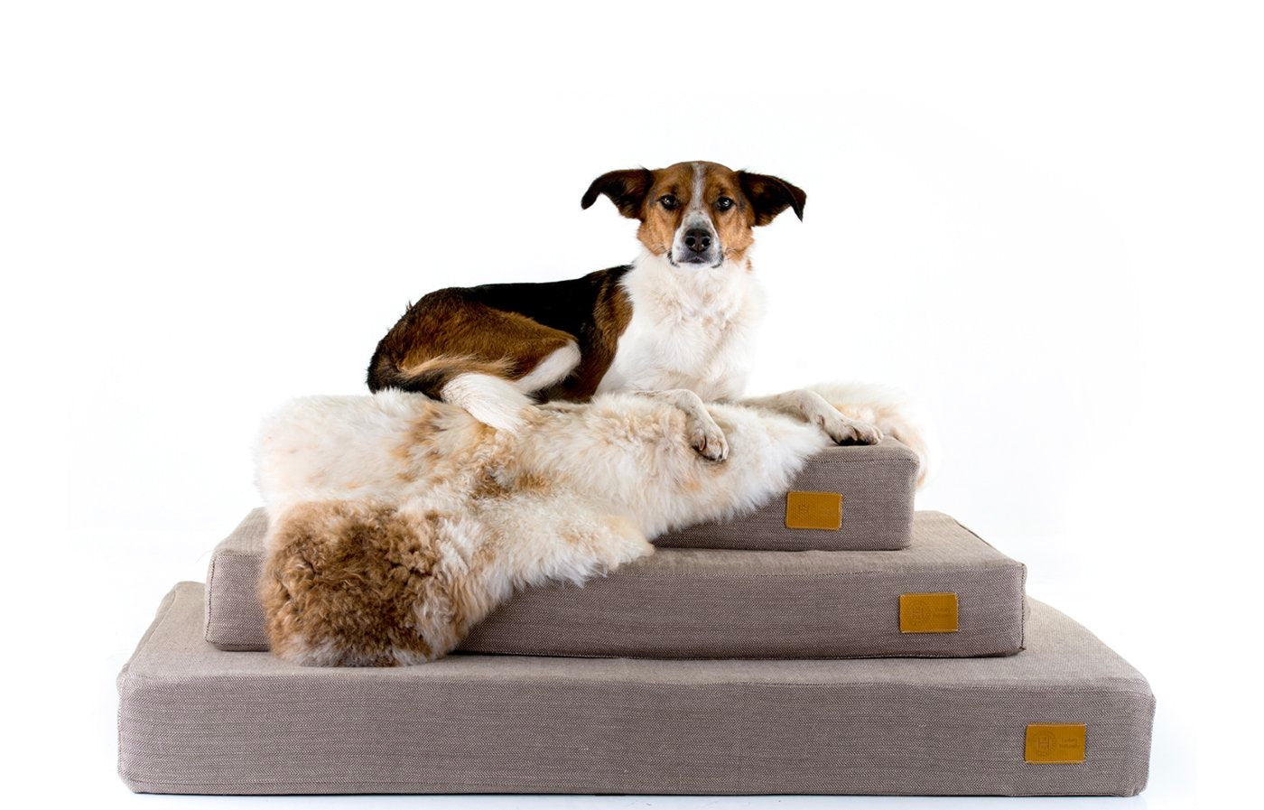Orthopaedic beds for arthritic dogs