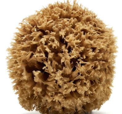 "Our Honeycomb Sea Sponge is a top quality Mediterranean natural sponge and  is generally recognized globally as ""the king of sponges"".  Especially useful for removing dead cells, dirt and cosmetics from the skin, and for reducing cellulite conditions. Its hypoallergenic properties make it appropriate even for the most delicate body skin."