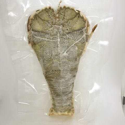Slipper Lobster (Uchiwaebi) - ウチワエビ- Udang Kipas