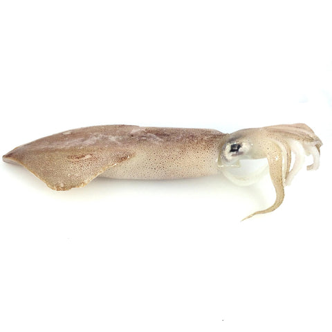Spear Squid (Yarīka) - ヤリイカ