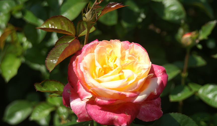The Importance of Taking the Time to Smell the Roses