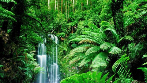 Indonesia Beautiful Rainforest