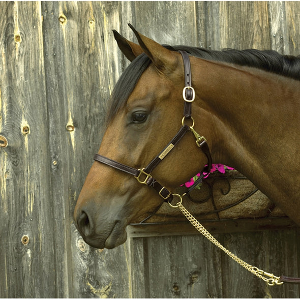 "3/4"" Premium Show Halter with Plate - Equestrian Chic Boutique"