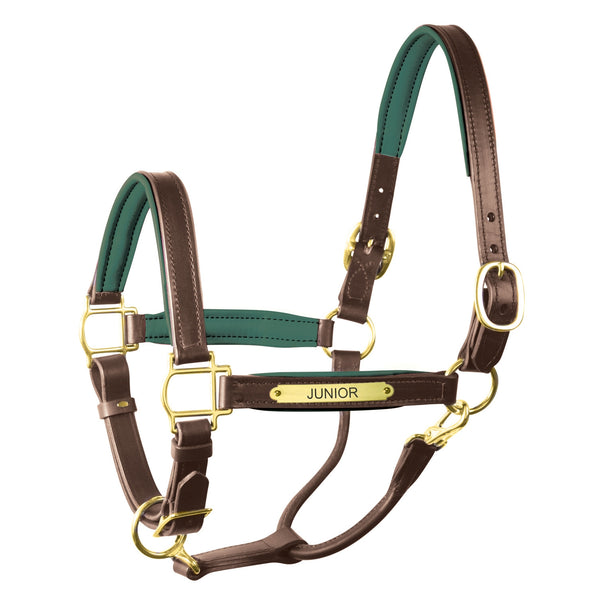 Padded Leather Halter with Plate - Equestrian Chic Boutique