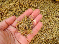 What are the benefits of Rice Bran Oil