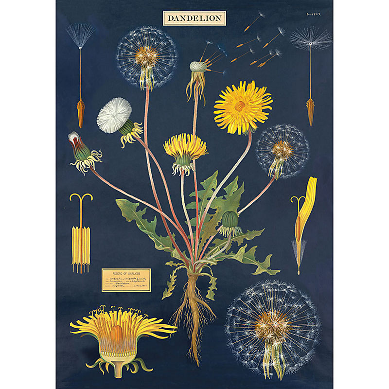Dandelion Chart Wrapping Paper