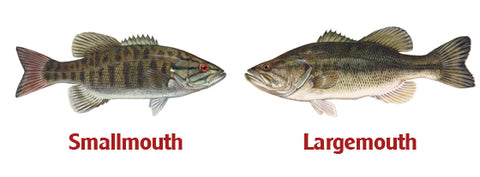 bass small or large mouth