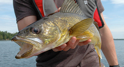 Walleye fishing Best deal fishing