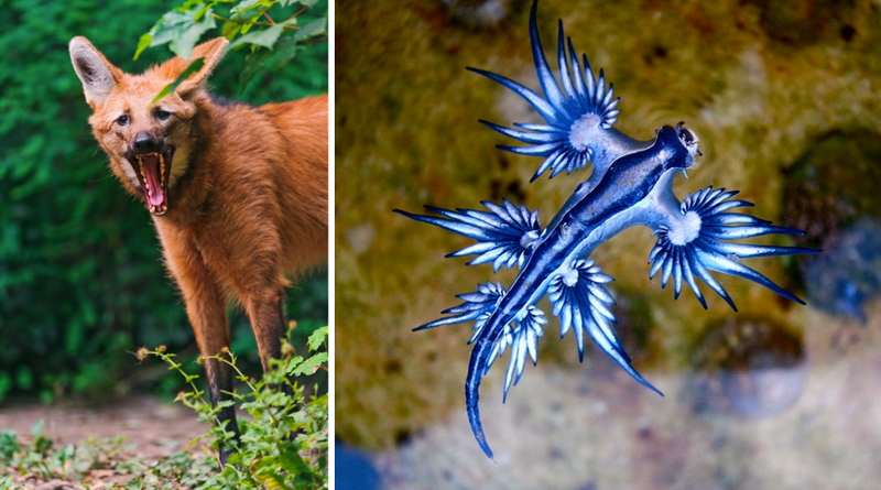 Six of The Earth's Most Beautiful and Unique Animals