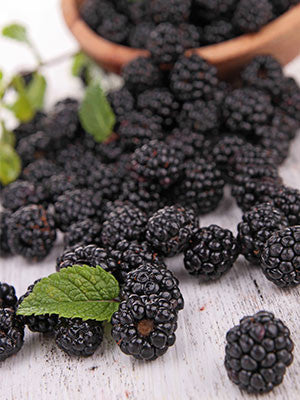 Blackberry + Mint  - PG Free - USDA Certified Organic