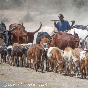 cattle farmer in Ethiopia