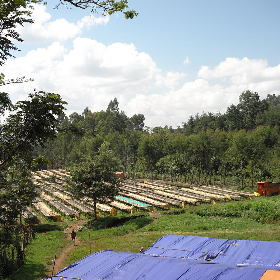 Distant view of coffee drying racks