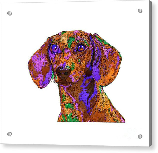 Acrylic Print - Chloe. Pet Series