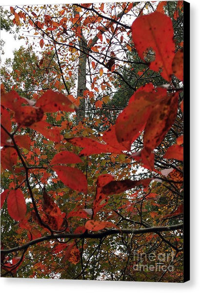 Canvas Print - Autumn Leaves In Red