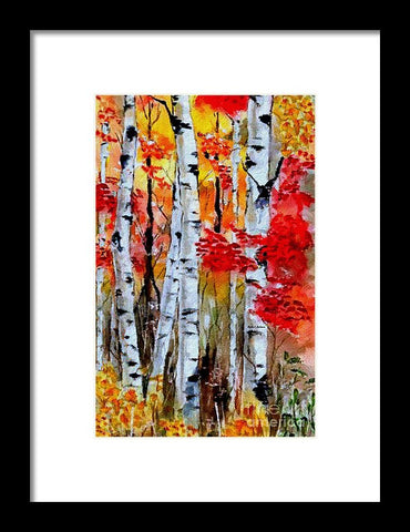 Birch Trees In Fall - Framed Print