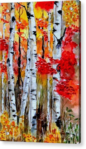 Birch Trees In Fall - Acrylic Print