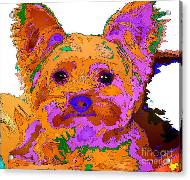 Acrylic Print - Buddy The Baby. Pet Series