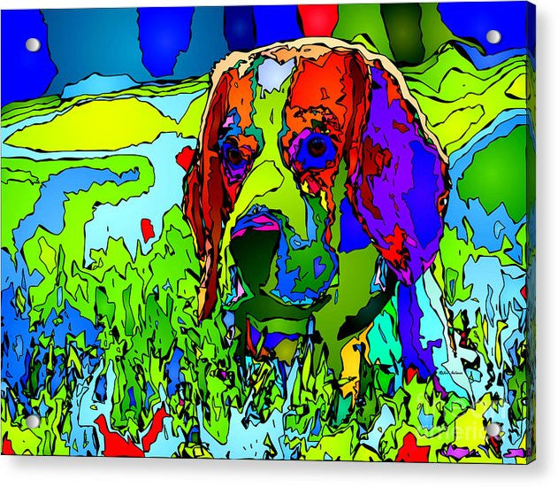 Acrylic Print - Dogs Can See In Color