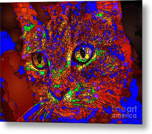 Metal Print - Looking For An Owner. Pet Series