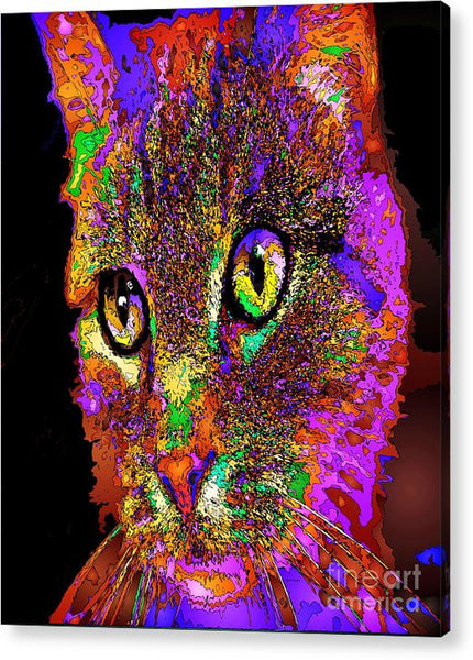 Acrylic Print - Muffin The Cat. Pet Series