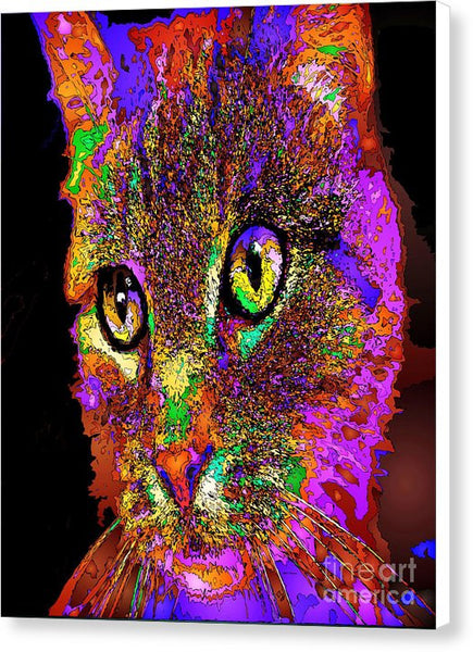 Canvas Print - Muffin The Cat. Pet Series
