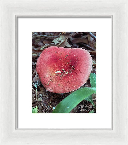 Framed Print - Mushrooms In The Woods