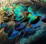 peacock feathers wall paper
