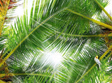 palm tree leaves ceiling wallpaper